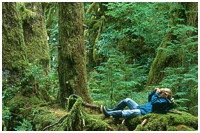 Bird-watching from the Comfort of a Mossy Bed - Gwaii Haanas Park