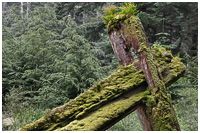 Nature Re-claiming Foundation of Haida Longhouse in Gwaii Haanas